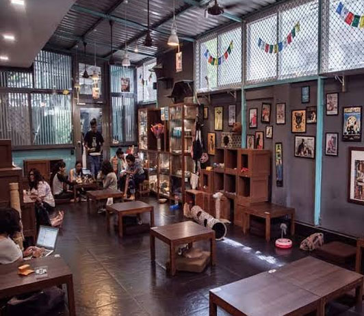 pet-friendly cafe with wooden furniture