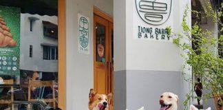 pet friendly cafes on zomato